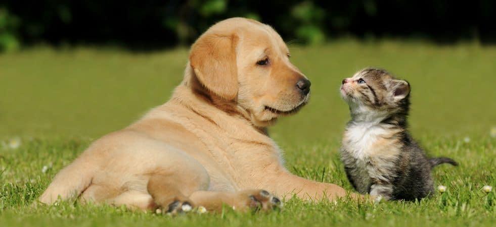 Tierrecht | Kanzlei Zantke