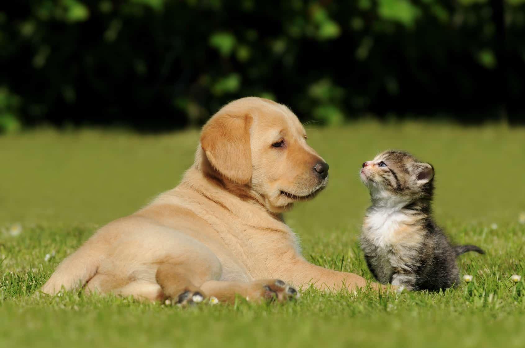 Kanzlei Zantke - Tierrecht